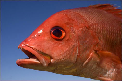【鯛ラバ】PROX桜魚SEでデカ真鯛を釣る!