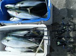 スローピッチジャークで根魚から大型青物までをターゲットにする場合のロッド&リール